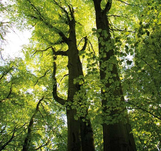 Der Naturpark Steigerwald liegt in unmittelbarer Nähe zu den Der Baumwipfelpfad in der Nähe der Steigerwald Apartmens – Ferienwohnungen im Herzen Frankens.